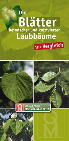 Die Blätter heimischer und kultivierter Laubbäume im Vergleich
