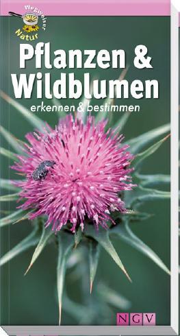 Pflanzen und Wildblumen erkennen & bestimmen: Wegweiser Natur