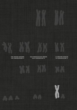 Das Chromosom X und das Menschliche Genom