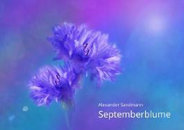 Septemberblume