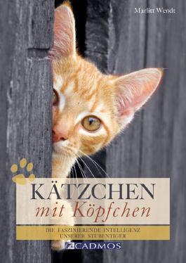 Kätzchen mit Köpfchen: Die faszinierende Intelligenz unserer Stubentiger