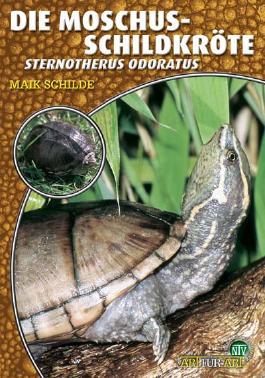 Die Moschusschildkröte