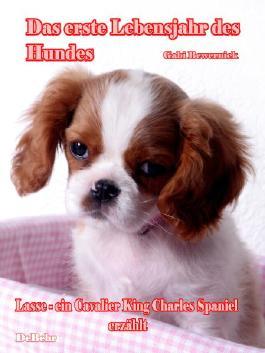 Das erste Lebensjahr des Hundes - Lasse - eine Cavalier King Charles Spaniel erzählt