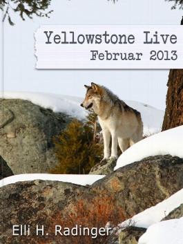 Yellowstone Live: Februar 2013