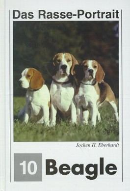 Beagle-Portrait