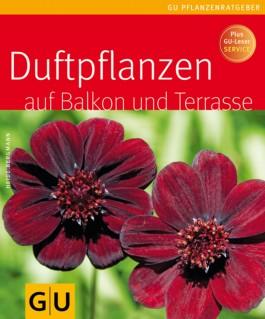 Duftpflanzen für Balkon und Terrasse