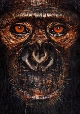 James und andere Affen