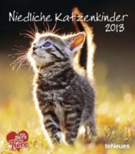 Katzenkinder 2009