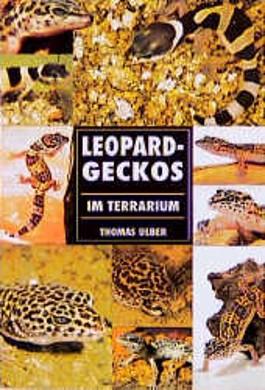 Leopardgeckos im Terrarium