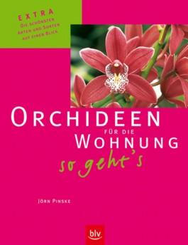 Orchideen für die Wohnung –so geht's