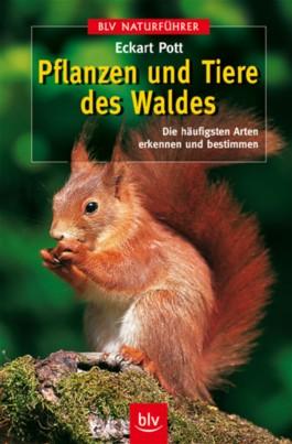 Pflanzen und Tiere des Waldes