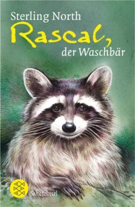 Rascal, der Waschbär