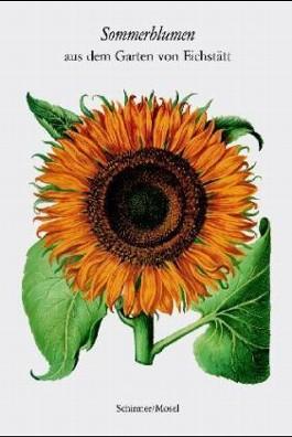 Sommerblumen aus dem Garten von Eichstätt