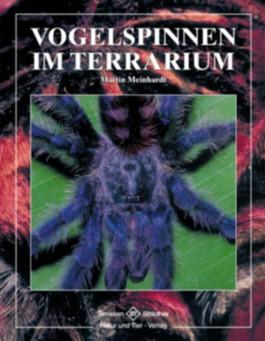 Vogelspinnen im Terrarium
