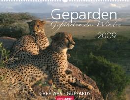 Weingarten-Kalender Geparden 2009