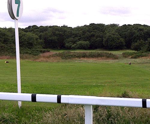 Tee next to the seven furlong pole