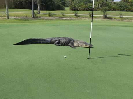 """Locals say the 13-footer was smaller than """"Big George"""""""