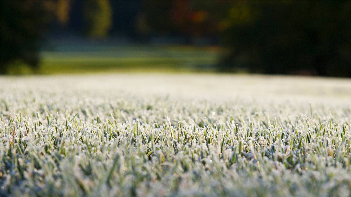 Why do some golf clubs use temporary greens, while others don't?