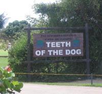'Teeth