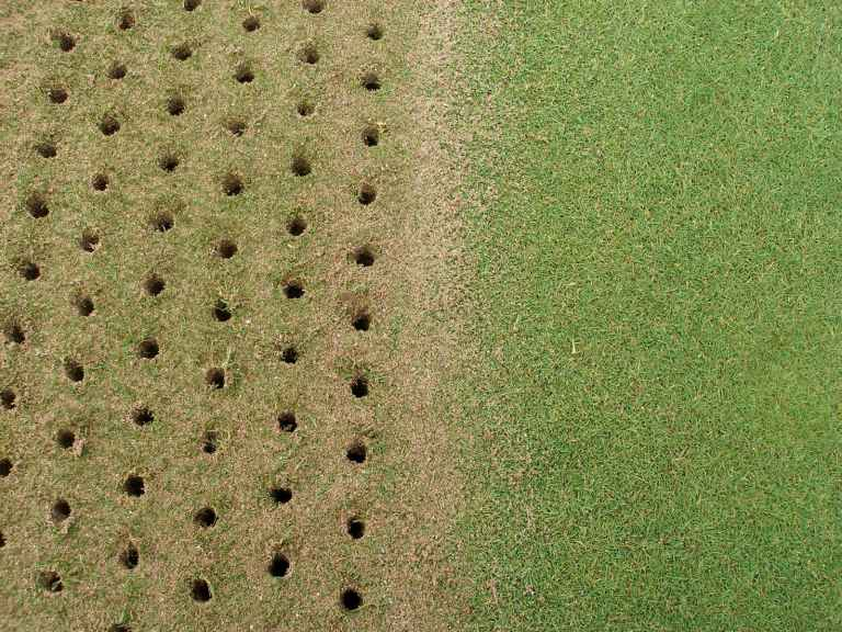 Why is it important to poke holes in your greens?