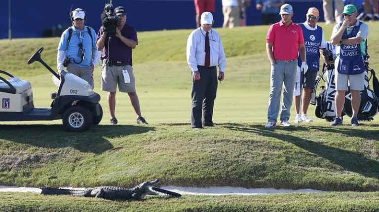 "PGA Tour pro chooses ""life over a good lie"" with gators nearby"