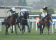 Horse racing jockey STRUCK IN EYE with golf ball during a race!