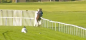 Racehorse CRASHES through railings at Yarmouth and onto golf course...