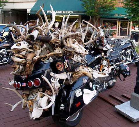 Hells Angels arrested over deer 'plundering'