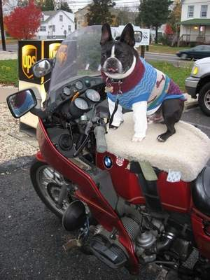 Man fined for taking his dog for a ride