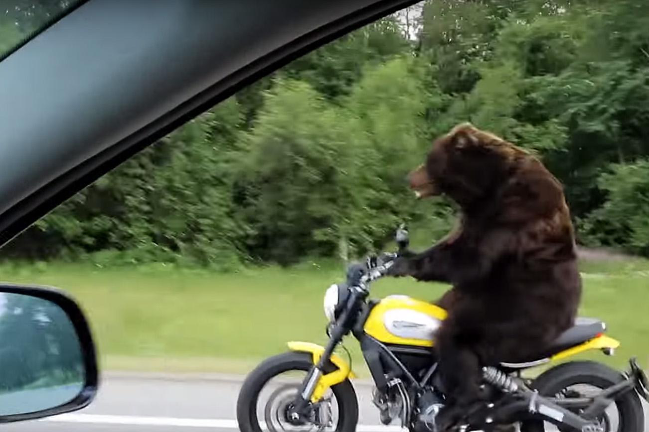 фото прикол медведь на велосипеде