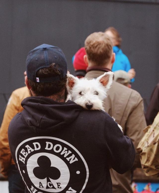 Bikeshed Festival Dog