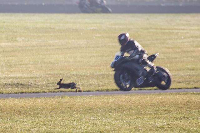 Hare-raising accident at Snetterton Harepin
