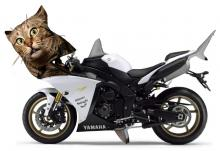 2012 Yamaha R1, it's a pussy cat.