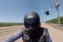 WATCH: Birds attack biker