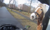 Scooter rider chases runaway horse