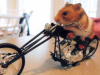 Hamster7's picture