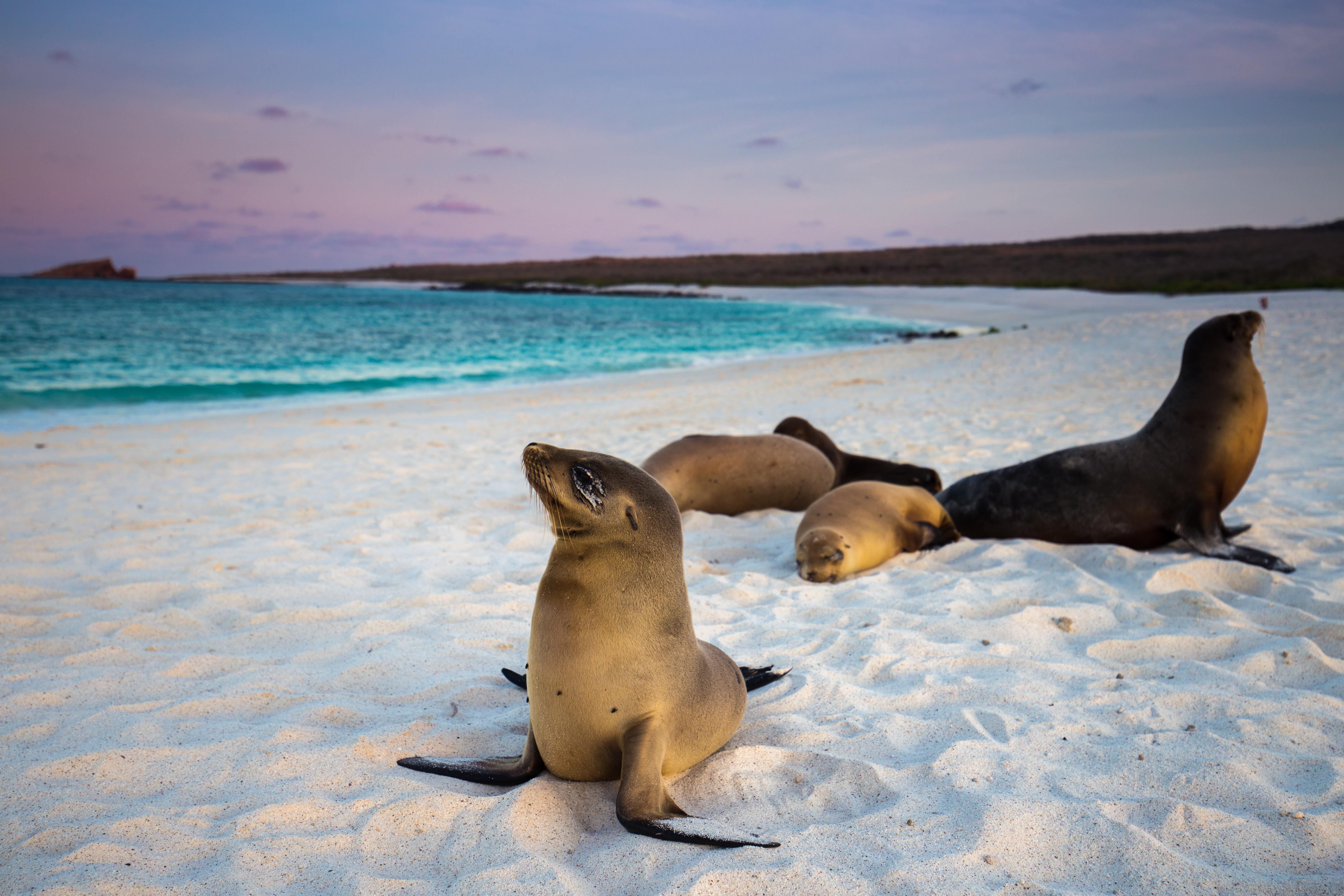 Galápagos_(c)_Brendan van Son