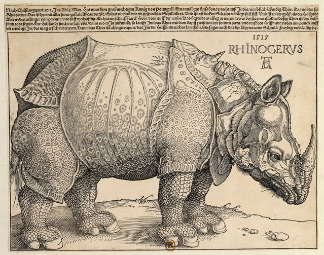 Rhinocéros 1515, Albrecht Durer