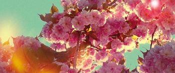 Le printemps du Bourgailh Visuel 2013