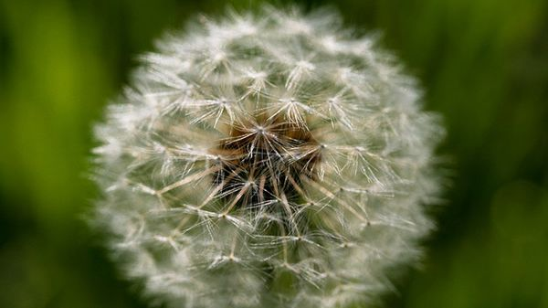 Printemps : le retour des allergies