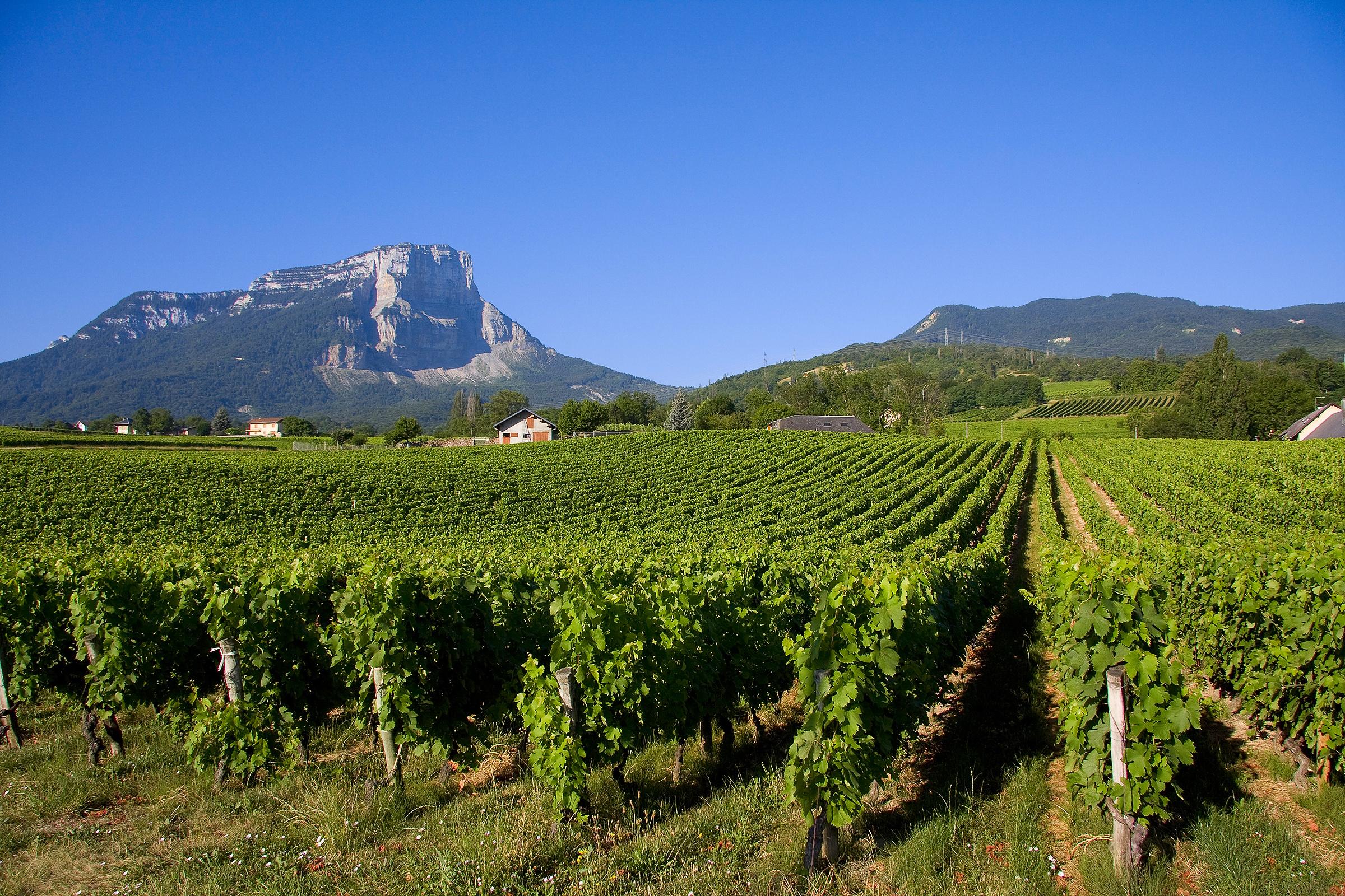 Vignes de Savoie