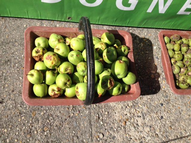 Les pommes explosées par la grêle à Lanouaille - Radio France