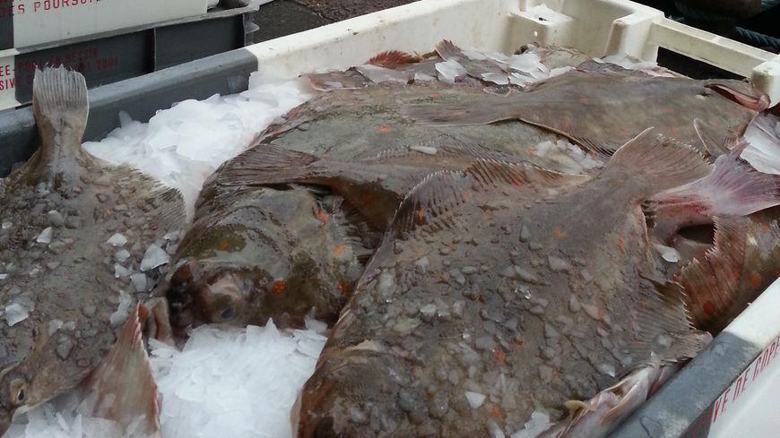 Les derniers déchargement de poissons avant la tempête