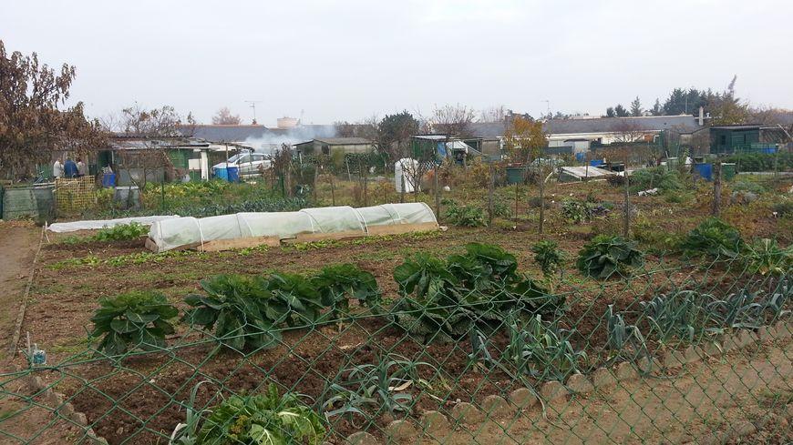 Jardins ouvriers et familiaux  en hiver Joué les Tours