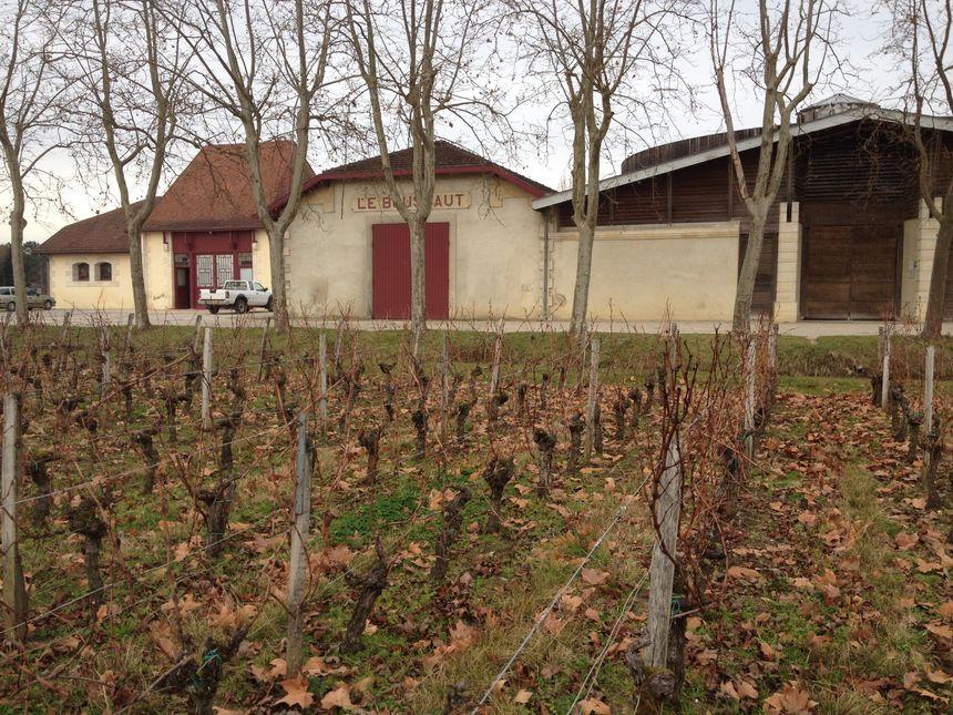 Un printemps décalé au château Bouscaut de Cadaujac ? - Radio France