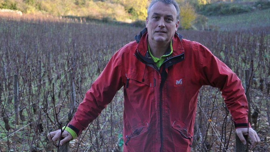 Emmanuel Giboulot refuse de traiter ses vignes contre un insecte parasite