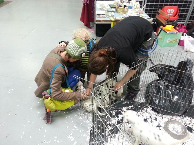 chien animalia - Radio France