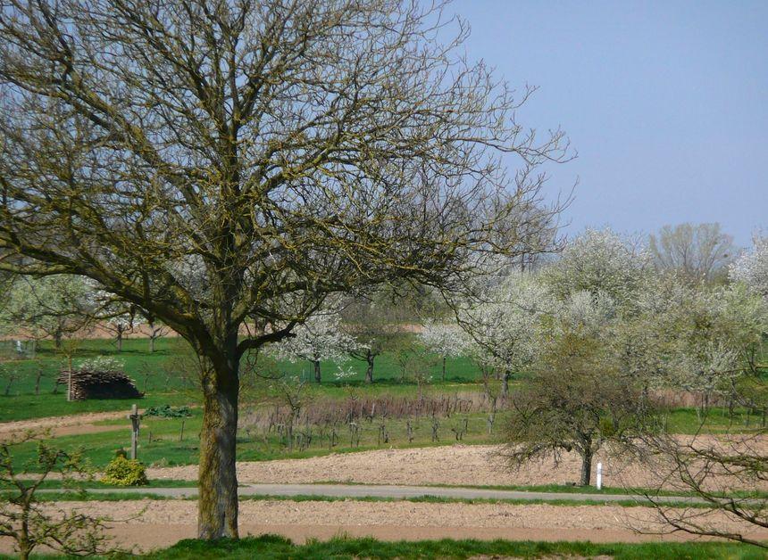 Le printemps autour de Mothern - Radio France