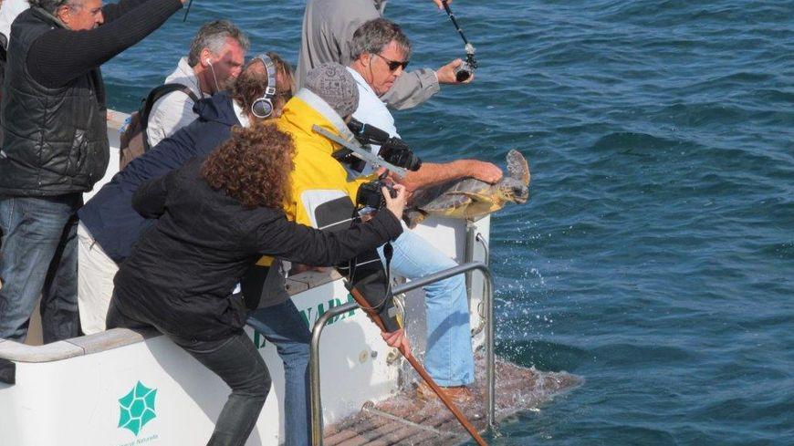 Le lâcher de la tortue caouanne à Argelès-sur-Mer / Dominique Libert