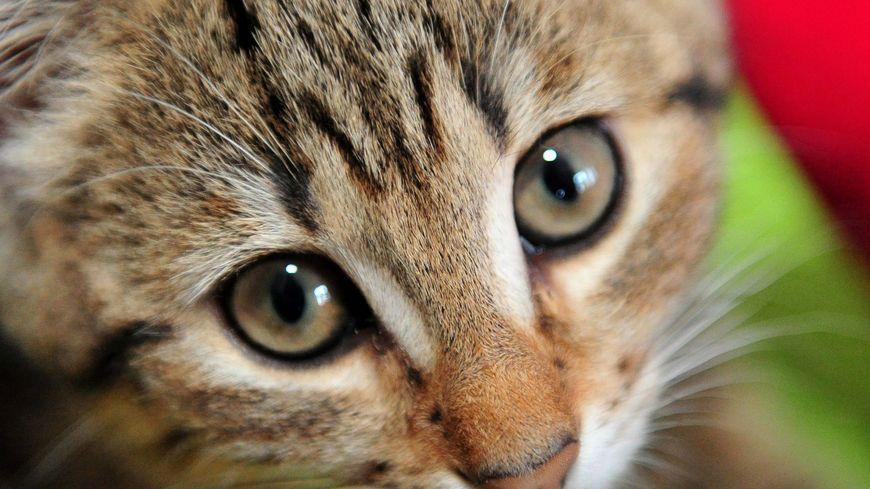 89% des Français sont favorables à cette modification du statut de l'animal dans le Code civil